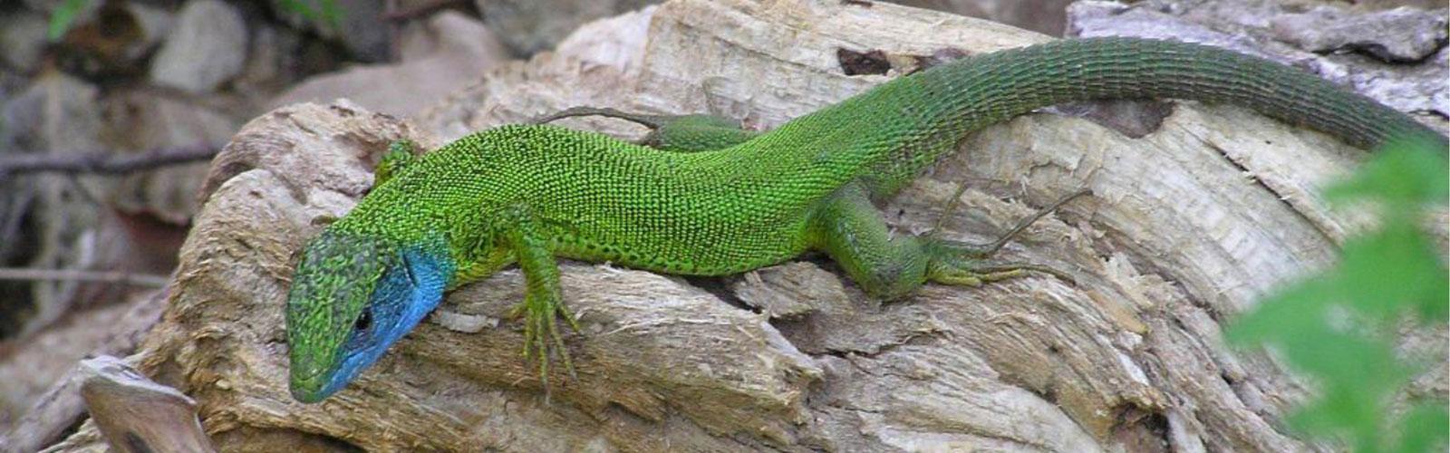 nacionalni-park-kozara-fauna-2