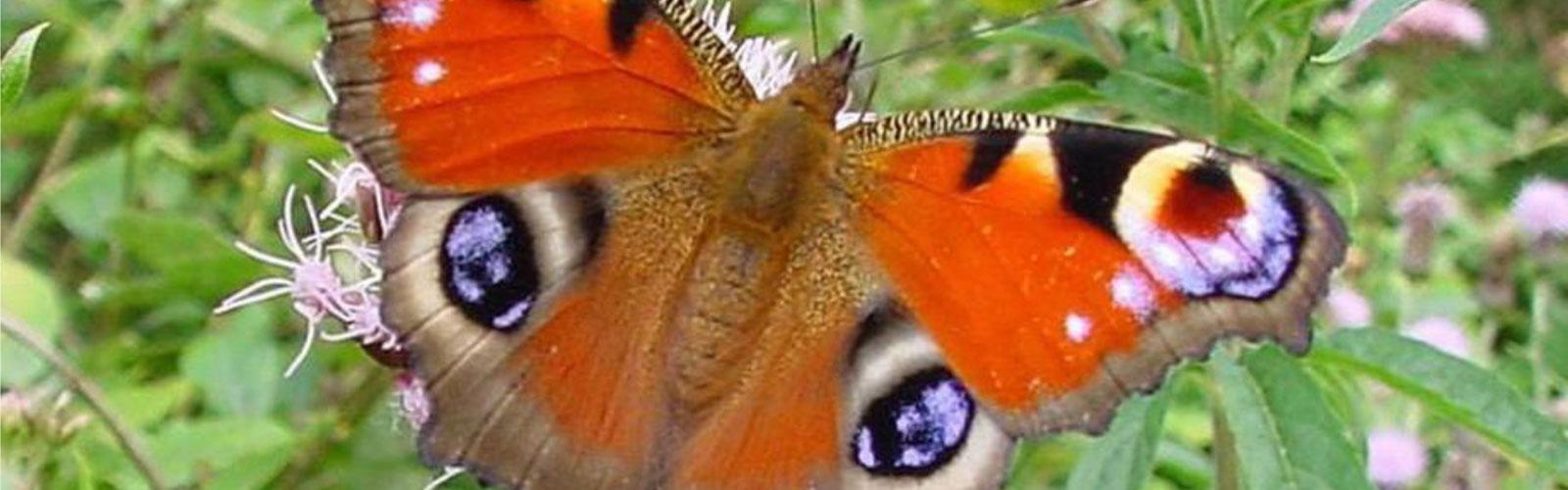 nacionalni-park-kozara-fauna-5