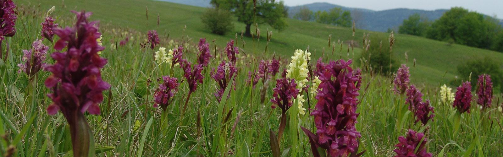 nacionalni-park-kozara-flora-10