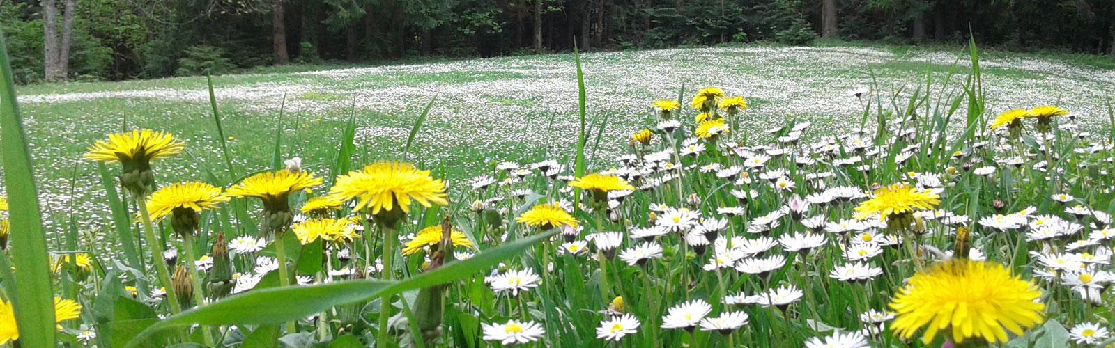 nacionalni-park-kozara-flora-1