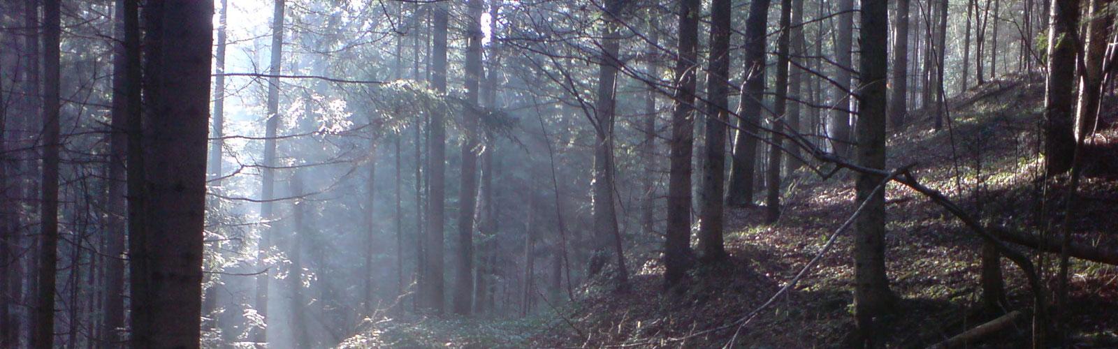 nacionalni-park-kozara-vegetacija-i-biljni-fond-2