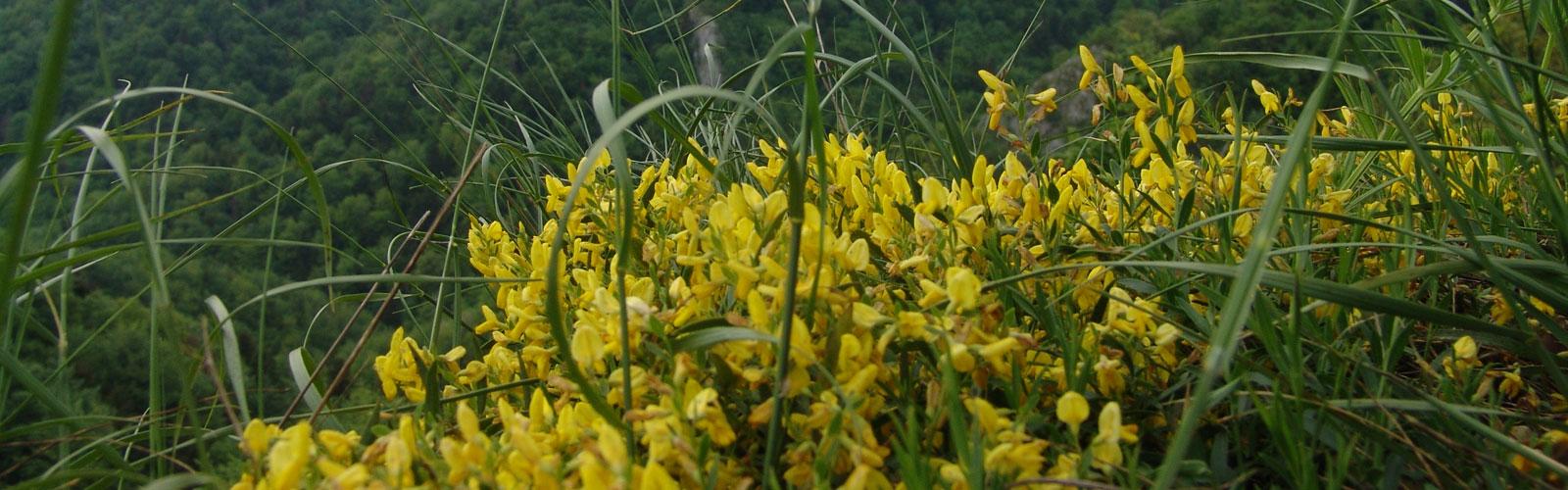 nacionalni-park-kozara-vegetacija-i-biljni-fond-6