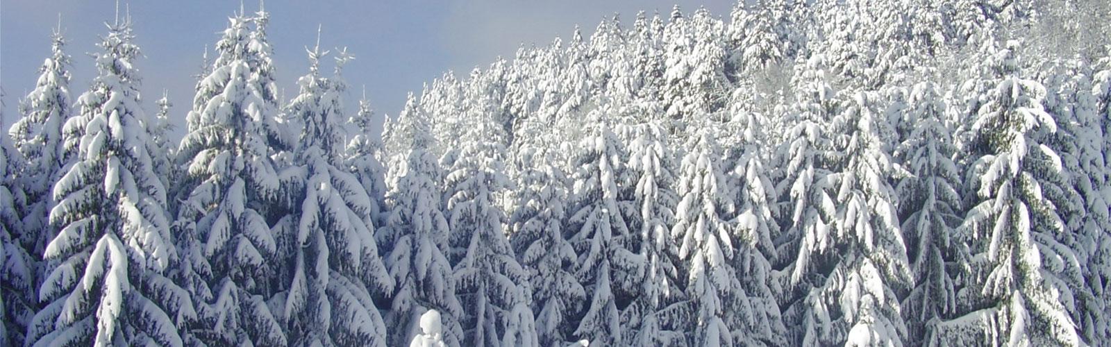 nacionalni-park-kozara-vegetacija-i-biljni-fond-7
