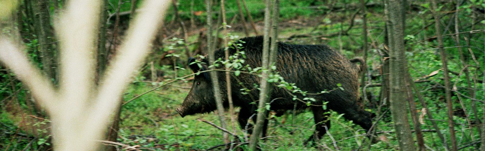 nacionalni-park-kozara-posebno-loviste-1