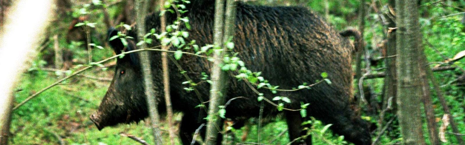 nacionalni-park-kozara-fauna-1