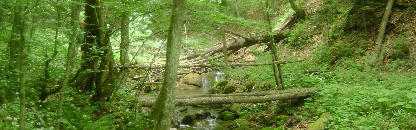 nacionalni-park-kozara-vegetacija-i-biljni-fond-3