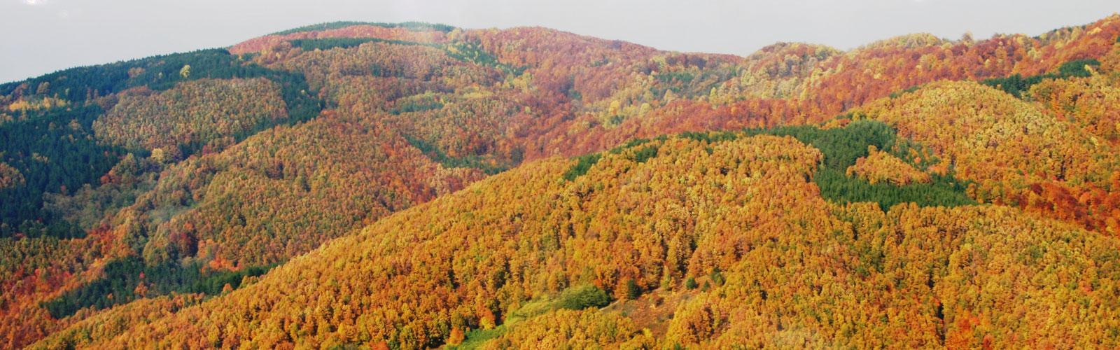 nacionalni-park-kozara-flora-6