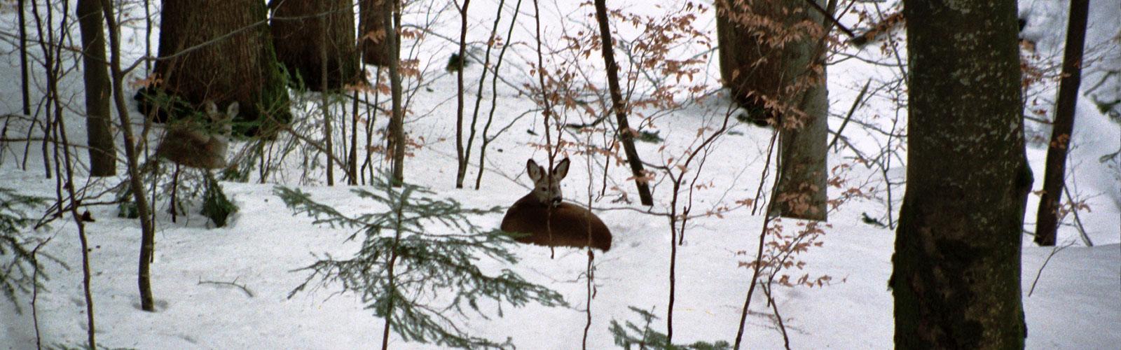 nacionalni-park-kozara-posebno-loviste-5
