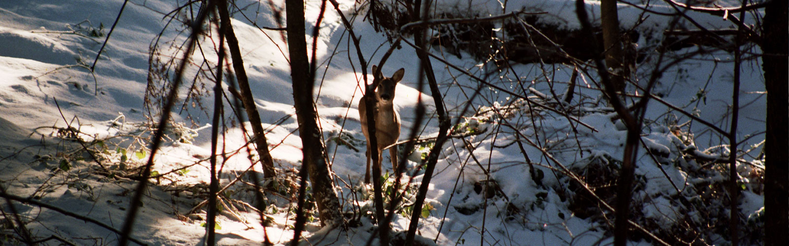 nacionalni-park-kozara-posebno-loviste-4