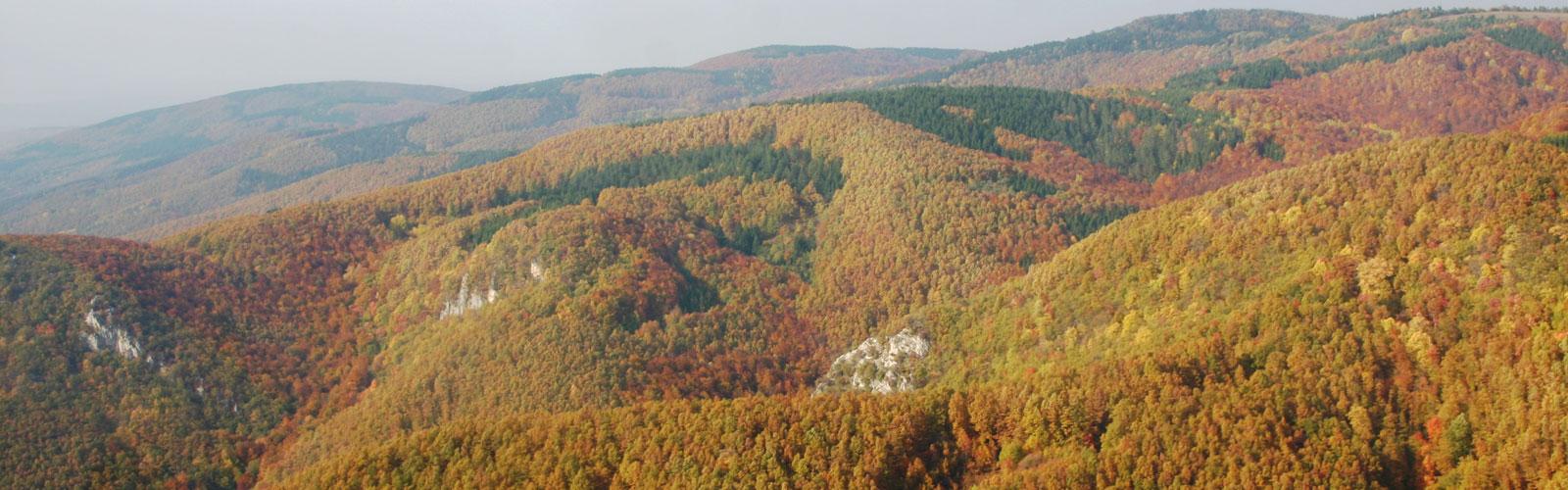 nacionalni-park-kozara-vegetacija-i-biljni-fond-4