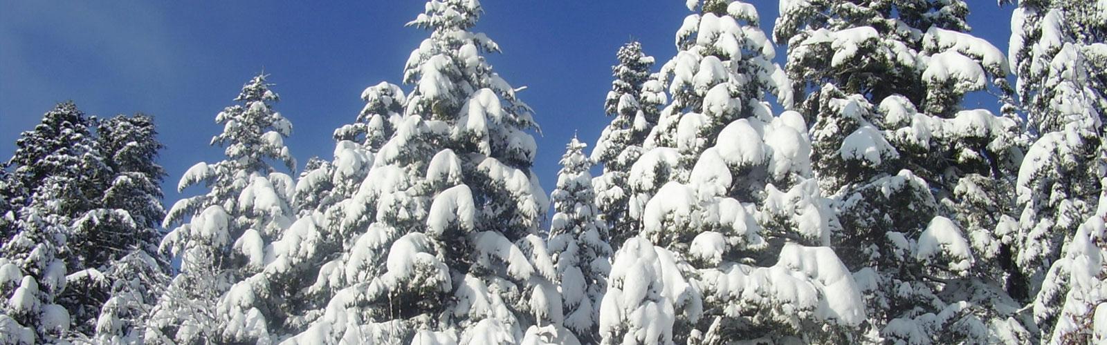 nacionalni-park-kozara-vegetacija-i-biljni-fond-5