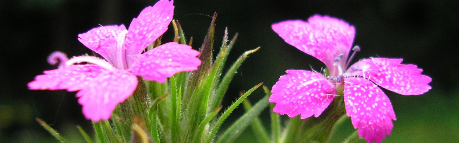 nacionalni-park-kozara-vegetacija-i-biljni-fond-1