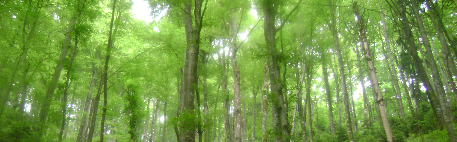nacionalni-park-kozara-flora-4